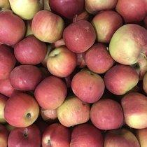 Яблоки «Флорена»