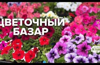 Прямой Эфир с Цветочного Базара